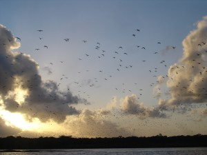 Noosa River birds seen on a sunset cruise